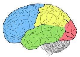 NEUROLOGIA INFANTIL - Foto 4