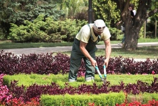 Jardinagem - Foto 11