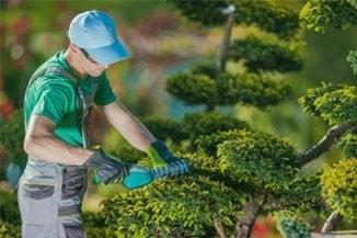Jardinagem - Foto 13