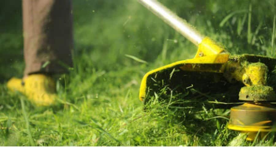 Jardinagem - Foto 14