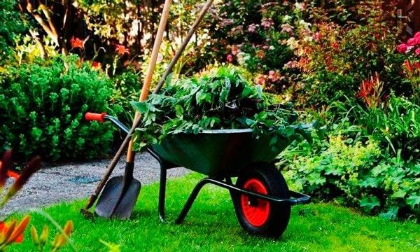 Jardinagem - Foto 19