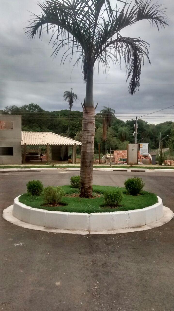 jardinagem e plantio de palmeiras.