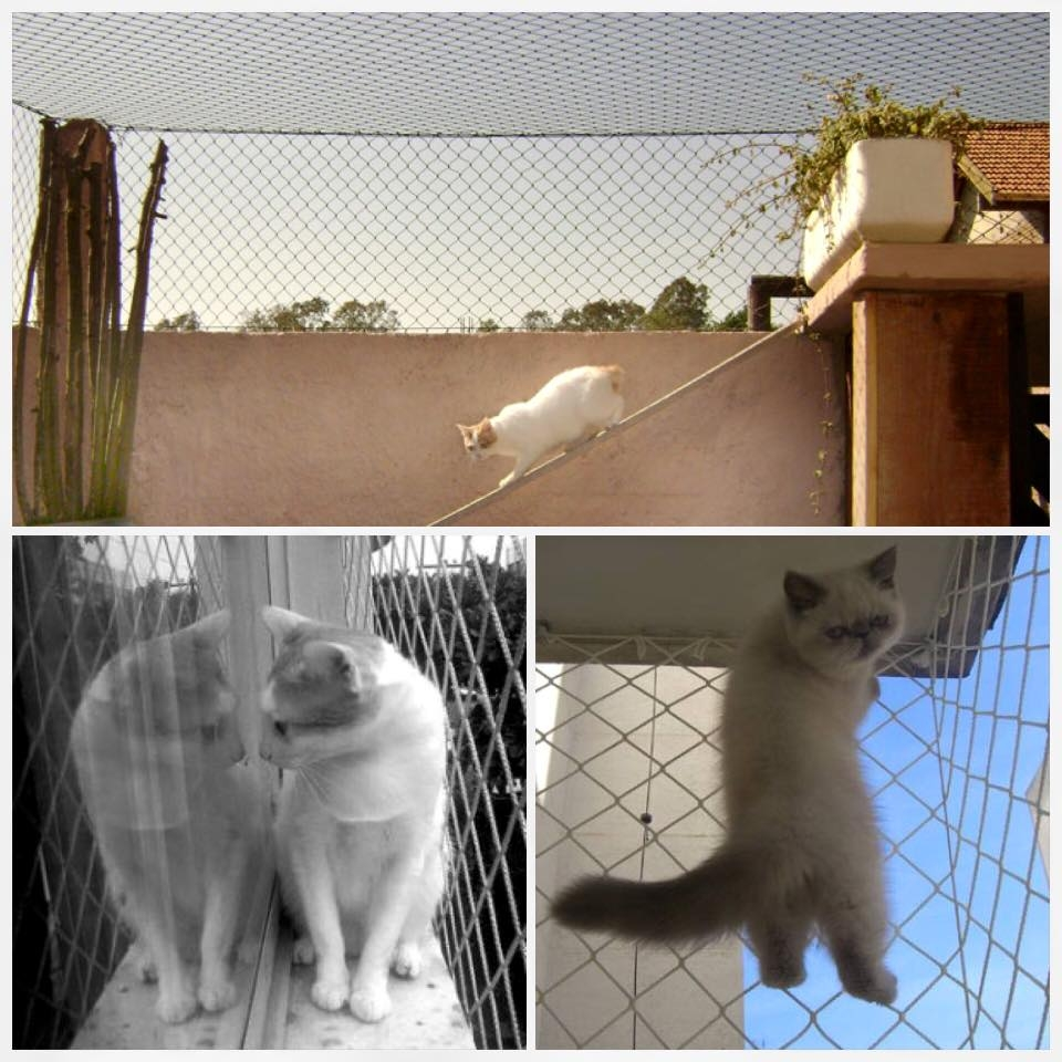 Redes de proteção para animais. - Foto 1