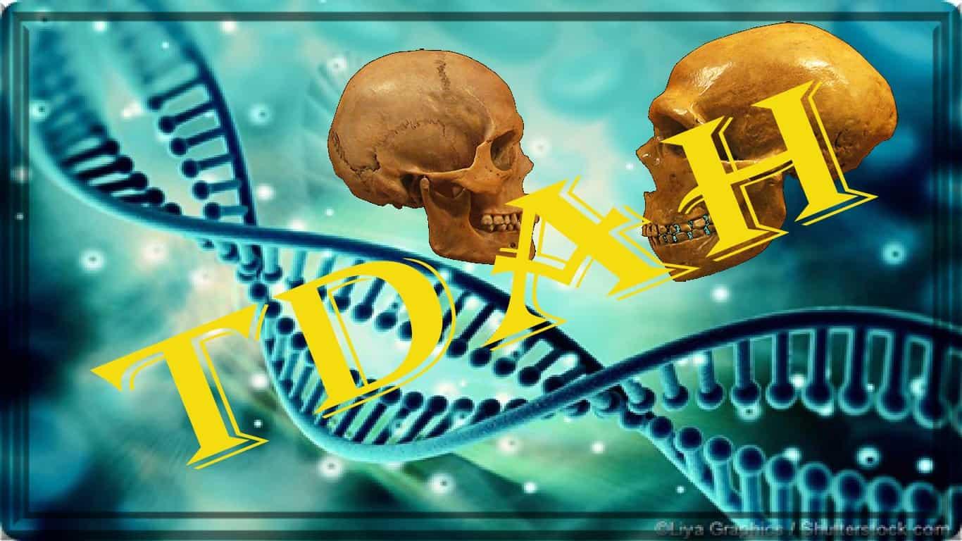 A análise genômica em amostras de neandertais e humanos modernos mostra uma diminuição...