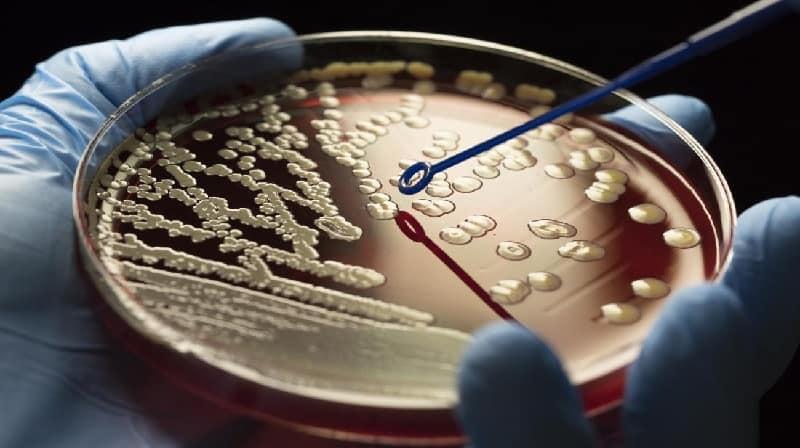 A ascensão das superbactérias: Enfrentando a crise de resistência aos antibióticos