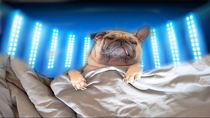 A exposição à luz com menos azul antes de dormir é melhor para o metabolismo energético