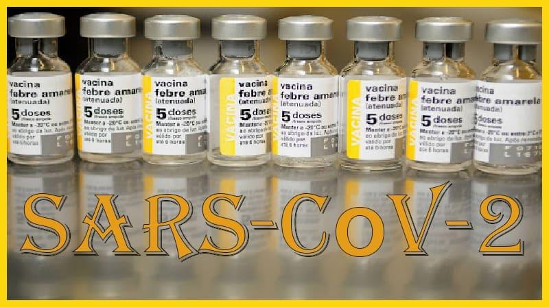 A vacina adaptada contra a febre amarela pode proteger contra COVID-19
