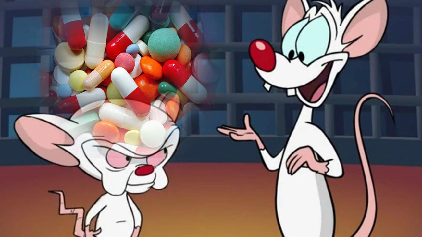 Antibióticos interrompem o desenvolvimento do 'cérebro social' em ratos