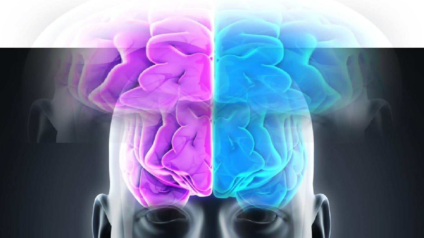 Cérebro esquerdo vs. cérebro direito: Fato e ficção