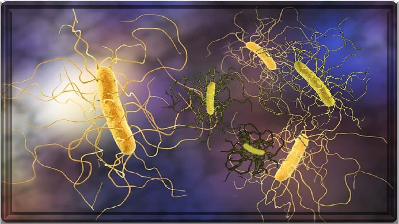 Clostridium difficile: o transplante microbiano fecal é mais eficaz e mais barato que os antibiótico