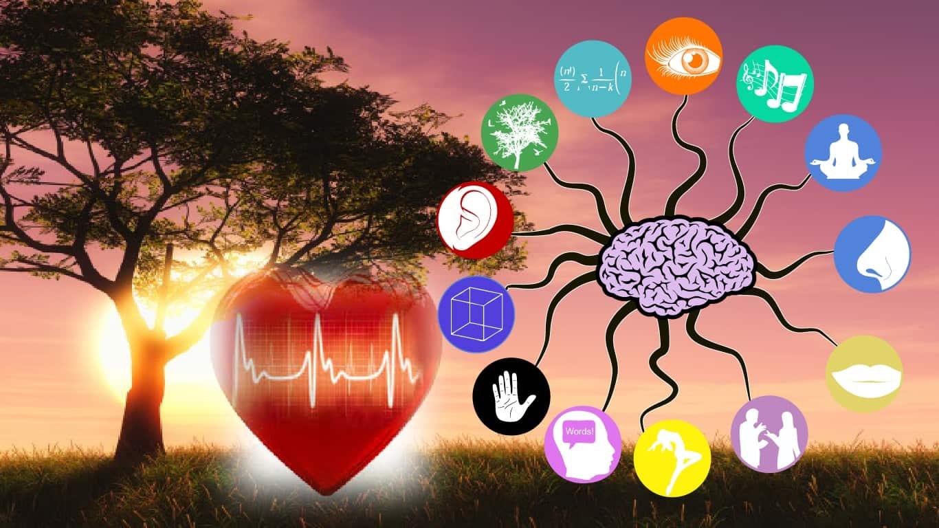 Como o coração muda nossa percepção sensorial