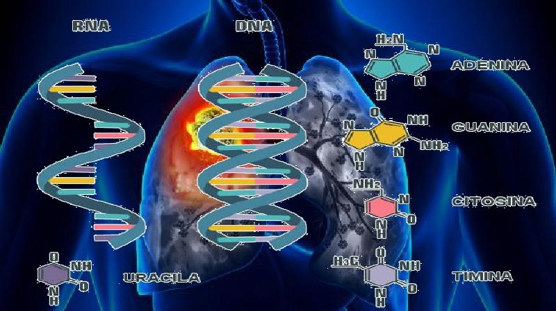 Crescimento do tumor de câncer de pulmão pela metade com nova abordagem