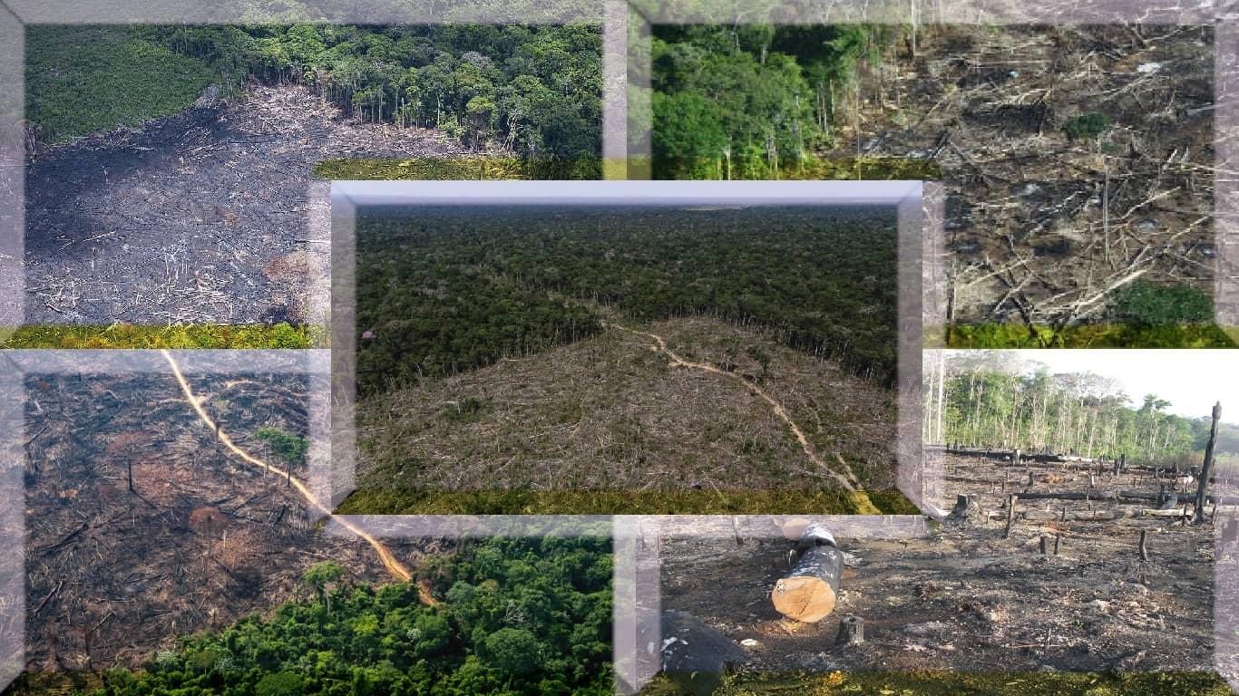 Desmatamento pode levar a infecções de animais para humanos