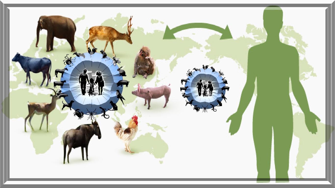 Doenças zoonóticas: Por que as infecções de animais são tão perigosas para os seres humanos?