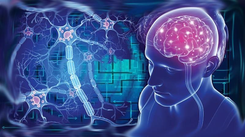 EM: Como células T específicas podem levar a novos tratamentos