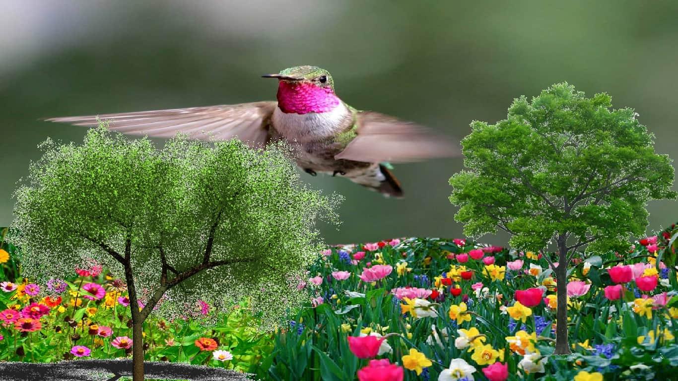 Espetacular vista aérea? Beija-flores veem cores diversas que os humanos só podem imaginar