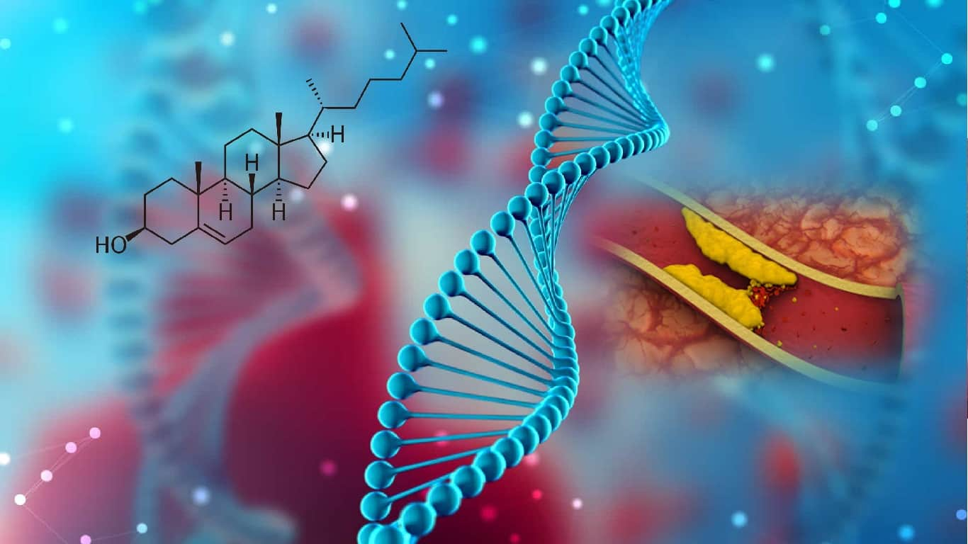 Estudo identifica gene que ajuda a regular os níveis de colesterol