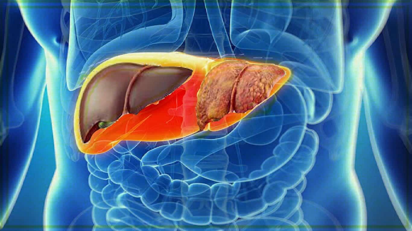 Estudo vincula exercício à prevenção de câncer de fígado