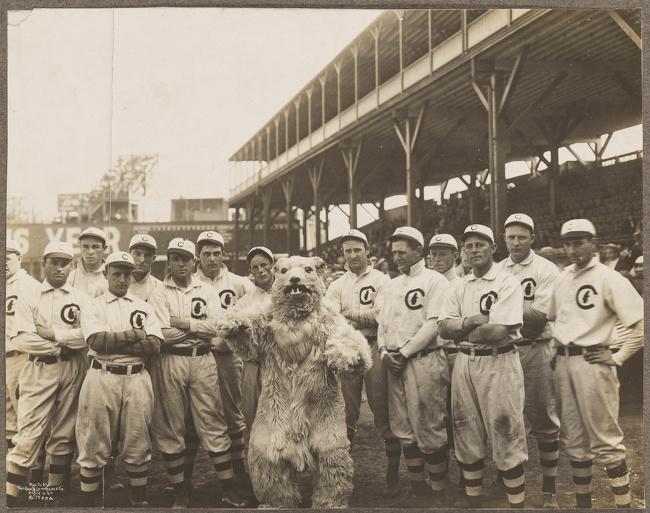 Chicago Cubs - Novo Mascote
