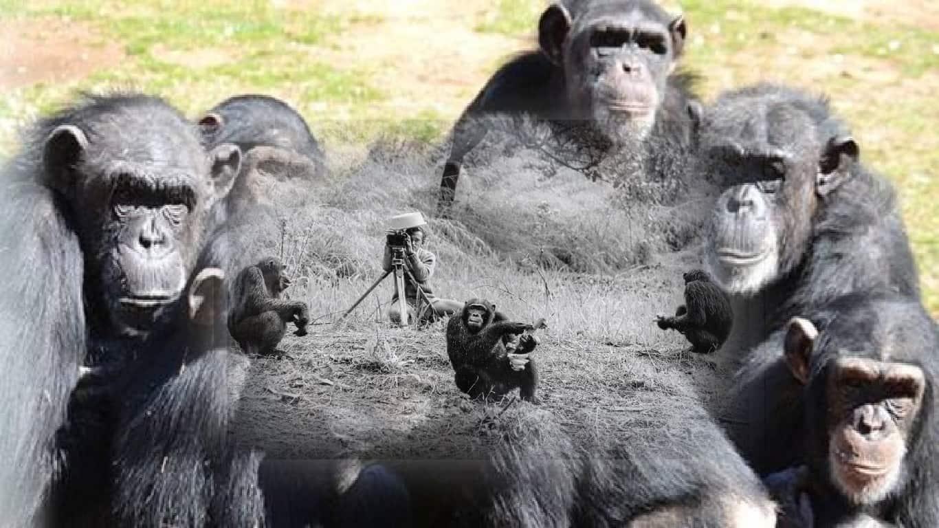 Mesmo os animais se beneficiam da distância social para prevenir doenças, mostram pesquisas