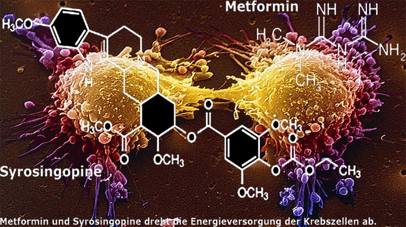 Metformina e Syrosingopine: drogas para diabetes e hipertensão: combinação mata células cancerígenas