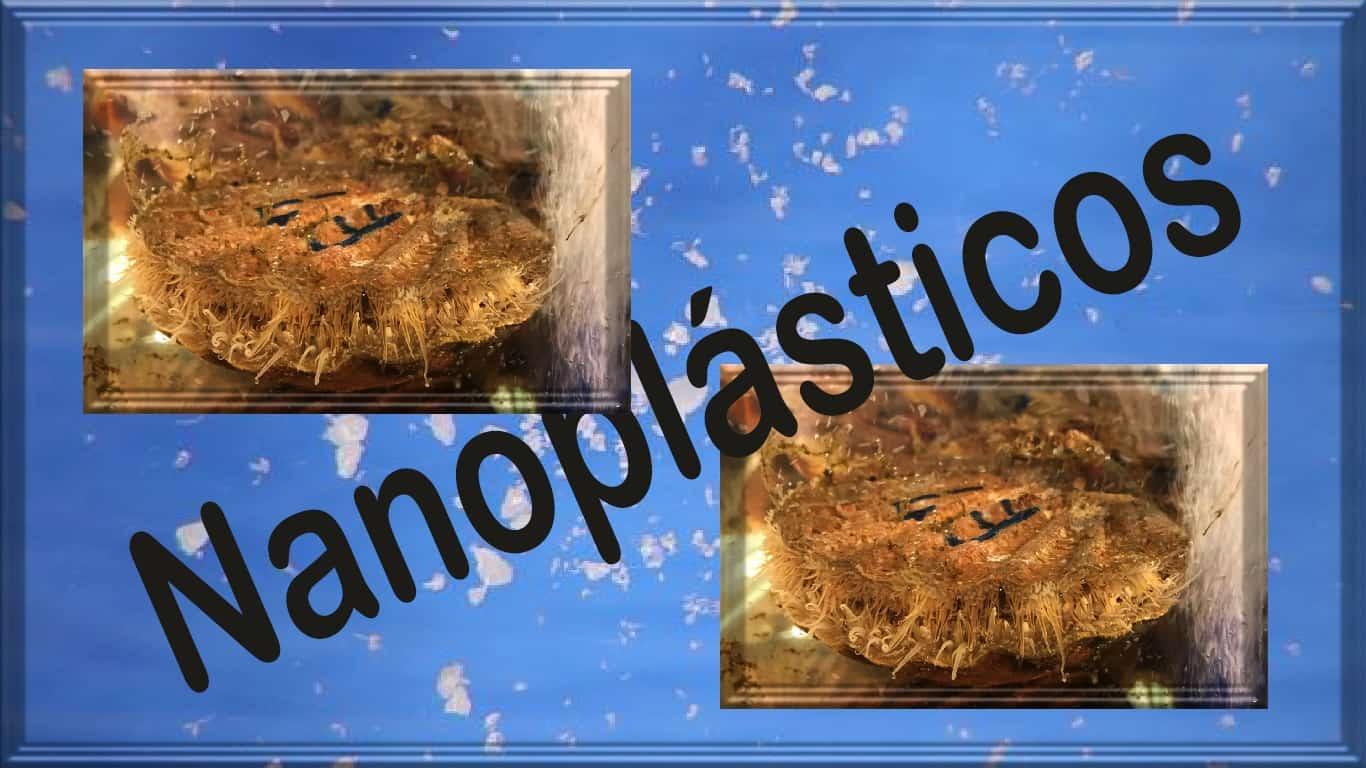 Nanoplasticos se acumulam nos tecidos das plantas terrestres