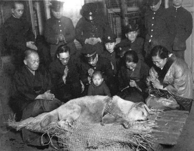 Hachicko antes do seu enterro em 1935