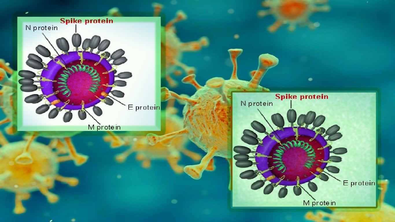 O coronavírus não escapou de um laboratório. Aqui está como sabemos.