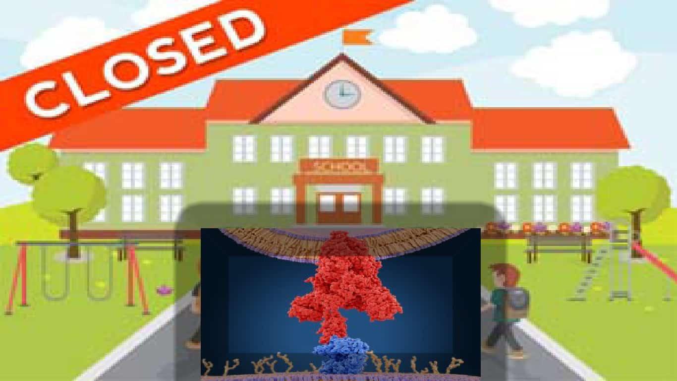 O fechamento de escolas tem apenas um papel menor na supressão do COVID-19