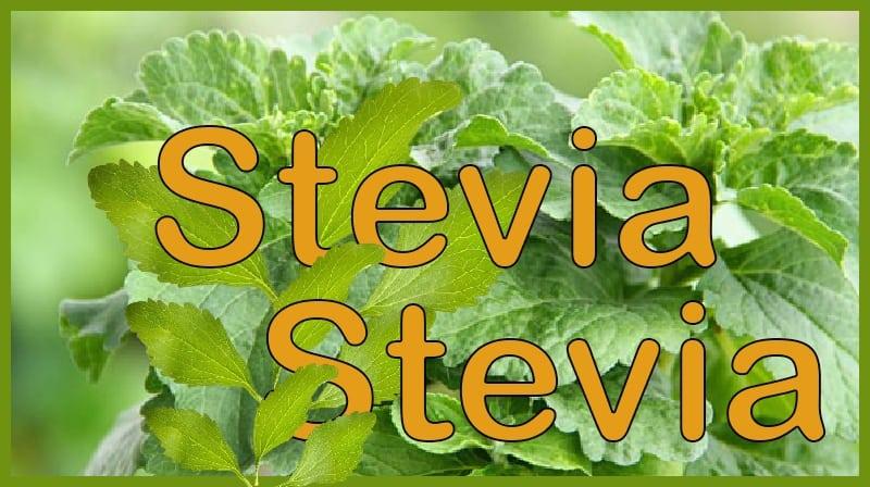 O substituto do açúcar, a Stévia, faz mal à saúde?
