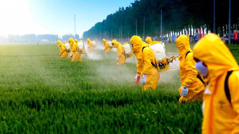 Os pesticidas nos alimentos são prejudiciais?