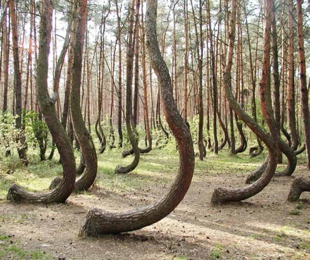 Curvas na Polônia