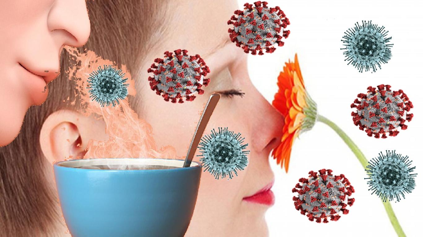 Perda de olfato no COVID-19 explicada por cientistas