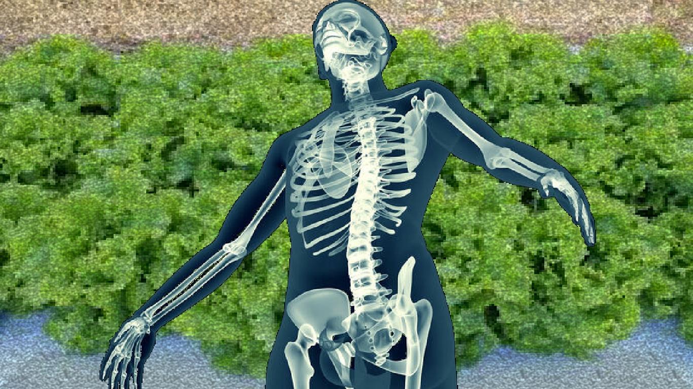 Poderia uma proteína cultivada em alface ajudar a curar ossos quebrados mais rapidamente?