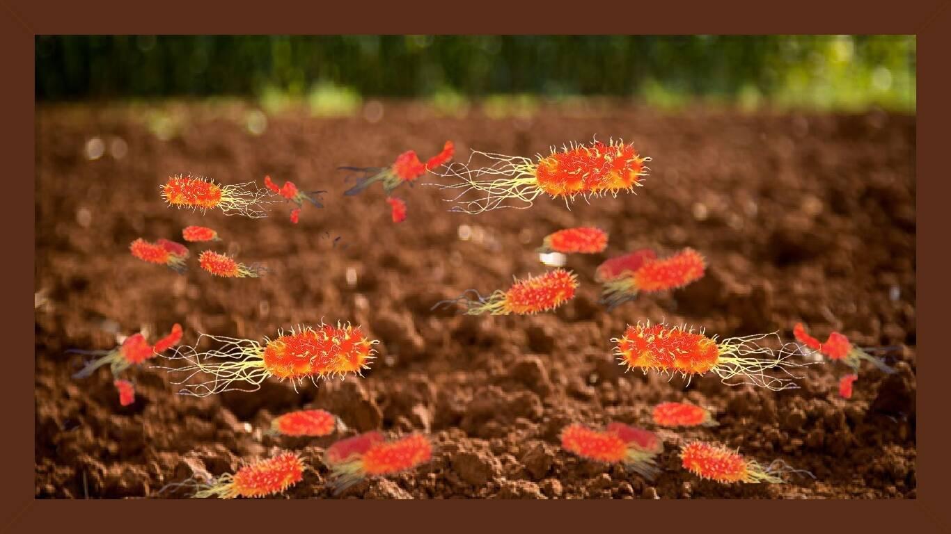 Resistência a antibióticos associada à poluição do solo