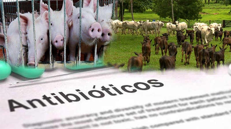 Resistência aos medicamentos: o uso de antibióticos em animais afeta a saúde humana?