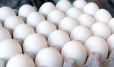 Ovos - Tipo Grande - Foto 1