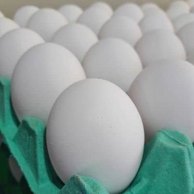 Ovos - Tipo Jumbo - Foto 1