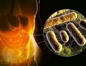 Cientistas identificam espécie de bactéria ligada à obesidade