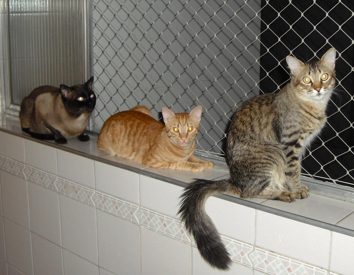 REDE DE PROTEÇÃO PARA PETS - Foto 2