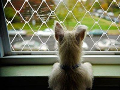 REDE DE PROTEÇÃO PARA PETS - Foto 13