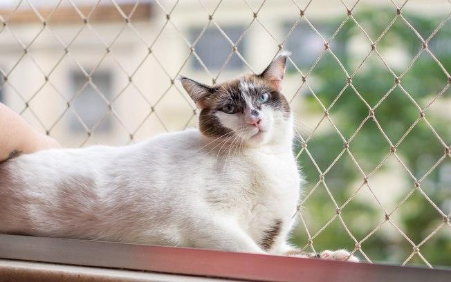 REDE DE PROTEÇÃO PARA PETS - Foto 14