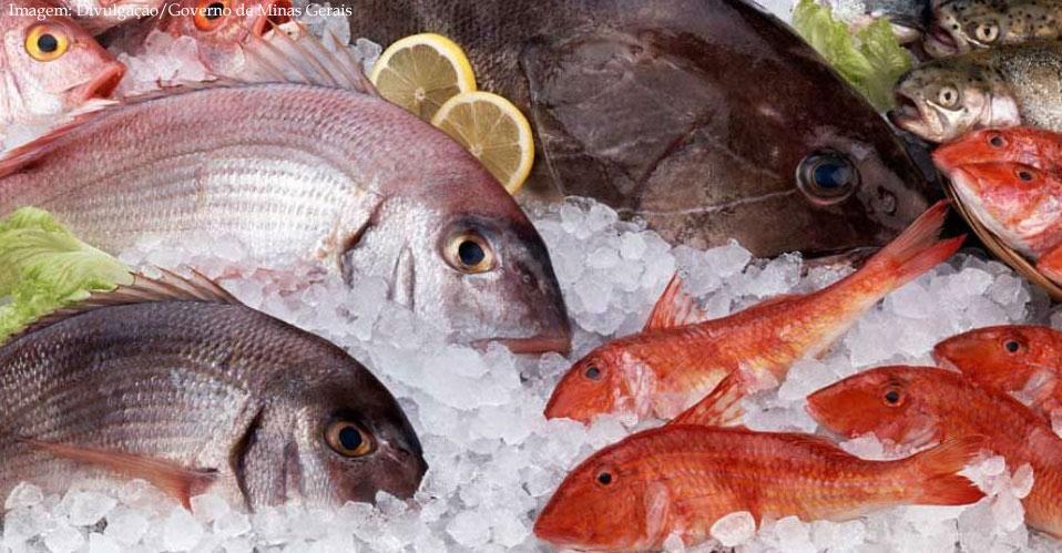 Imagem da notícia Confira dicas para comprar pescados com qualidade e segurança