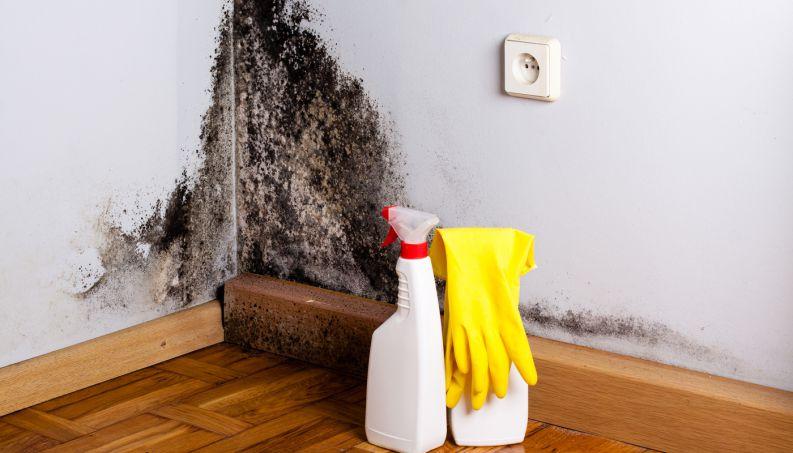 mofo-parede-limpeza-0816-1400x800.jpg