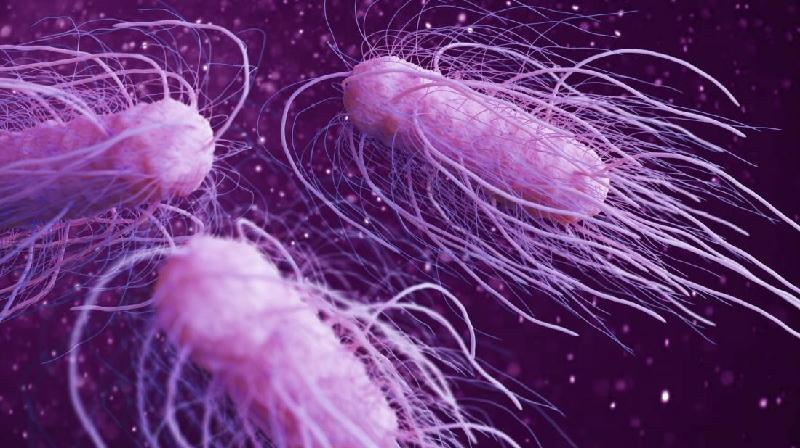 Antibioticosresistencia.jpg