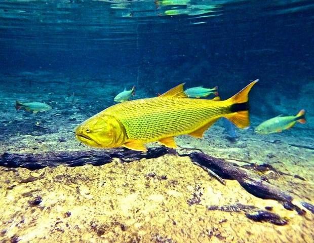 peixe-dourado.jpg