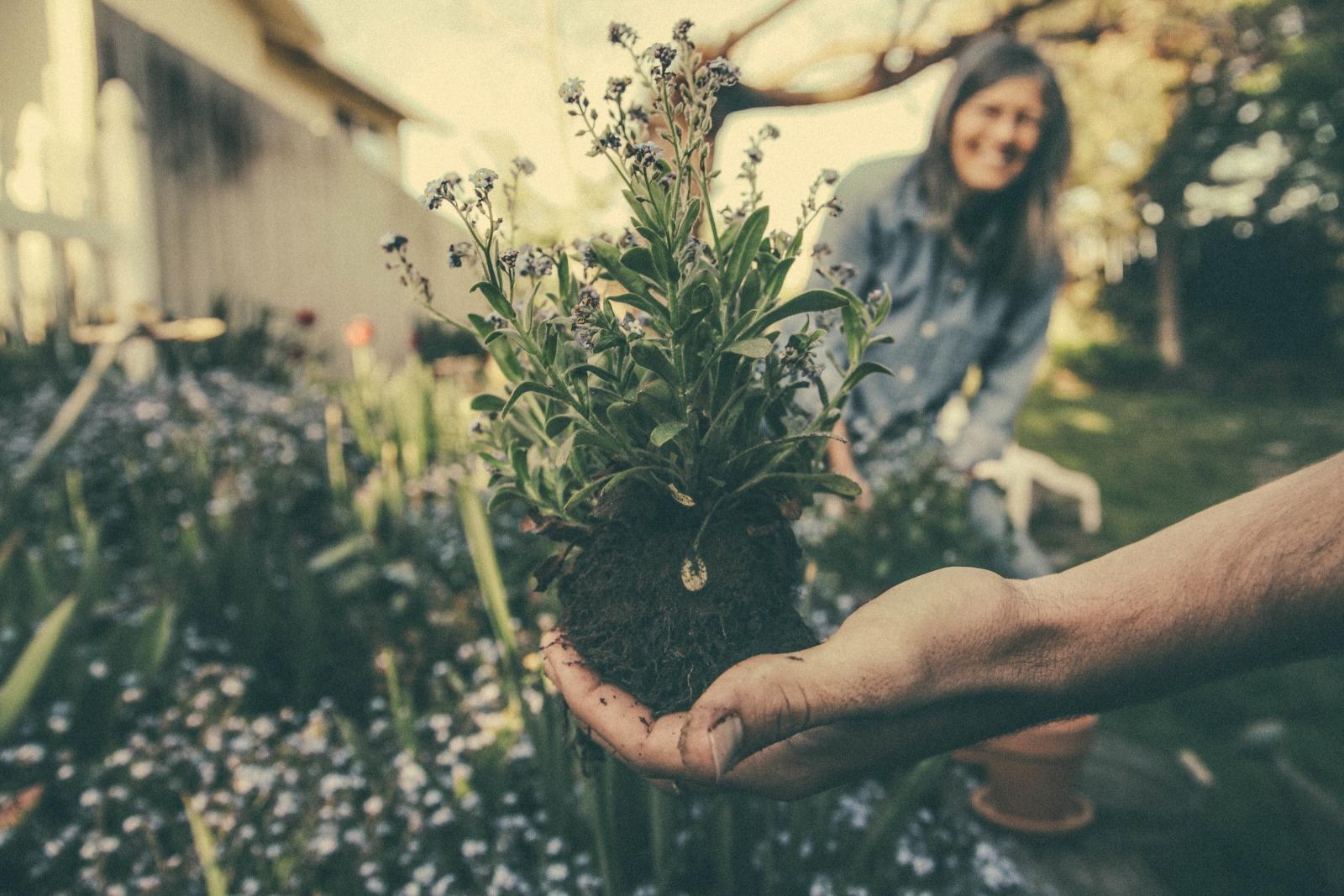 garden-soil-plant-soil.jpg